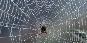 Search engine spiders crawl the web