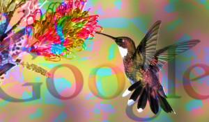 Google Hummingbird - Il colibrì di Google