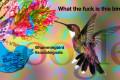 Hummingbird e i segnali sociali