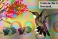 Google Pigeon: una prima analisi