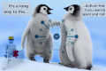 Chi colpisce Google Penguin 3.0?